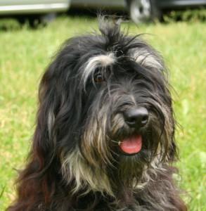 Pet Planning Can Facilitate Pet Ownership for Seniors